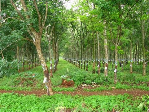 Báo cáo kết quả hợp tác với Campuchia