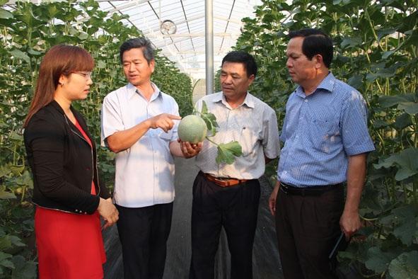 Xây dựng khu nông nghiệp ứng dụng công nghệ cao của huyện Cư M'gar