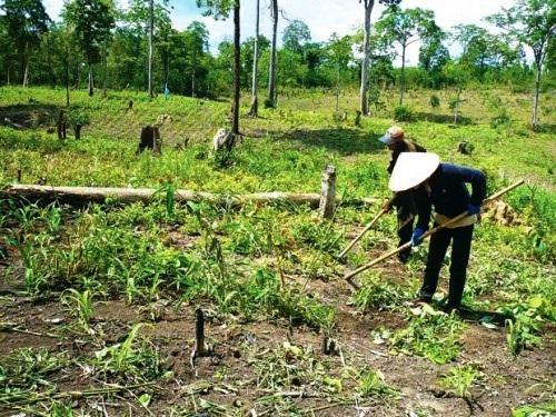 Phối hợp xử lý các đối tượng lấn chiếm đất rừng trái phép tại tiểu khu 215, 216 thuộc thao trường Quân sự Ea Thal, xã Cư Kbang, huyện Ea Súp