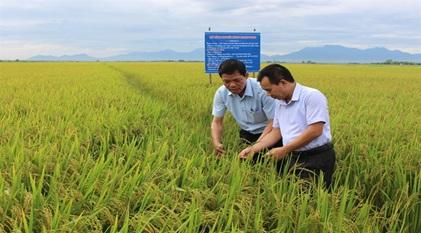 Cho phép thực hiện dự án khoa học và công nghệ Xây dựng mô hình sản xuất lúa giống và lúa thương phẩm chất lượng cao