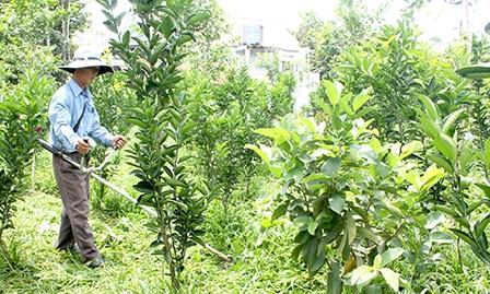 Chủ trương hỗ trợ cây trồng bị ảnh hưởng thẩm thấu của công trình thủy điện Srêpốk 3 tại huyện Buôn Đôn.
