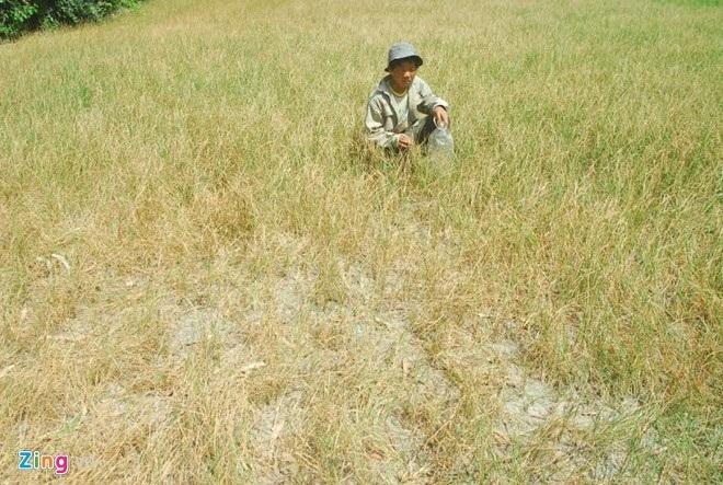 Thống nhất kế hoạch hỗ trợ khẩn cấp khắc phục hạn hán và xâm nhập mặn của ADB.
