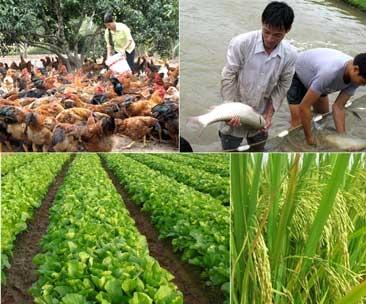 Báo cáo tình hình sản xuất nông nghiệp đối với một số loại cây trồng, vật nuôi trên địa bàn tỉnh.