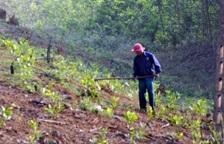 Tham mưu triển khai kế hoạch trồng rừng thay thế năm 2017