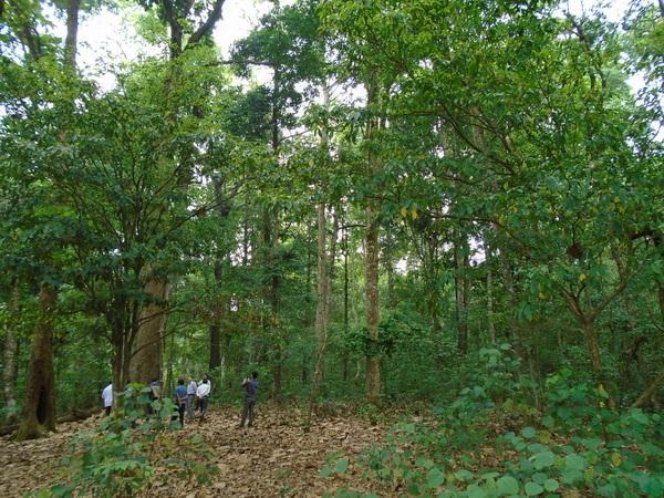 Thực hiện Chính sách chi trả dịch vụ môi trường rừng của Quỹ Bảo vệ và Phát triển rừng tỉnh.