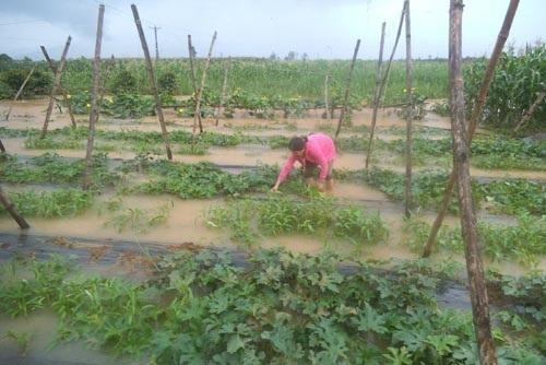 Kinh phí hỗ trợ giống khôi phục sản xuất do mưa lũ gây ra.