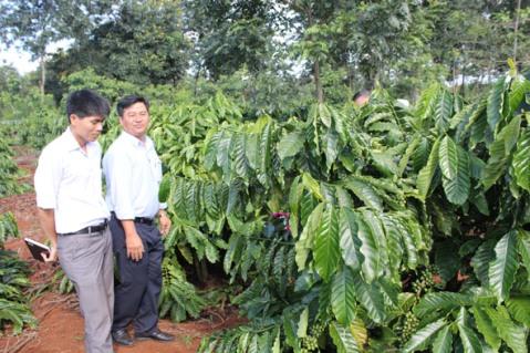 Phê duyệt phương pháp kiểm kê, đánh giá chất lượng vườn cây và suất đầu tư nông nghiệp của Công ty TNHH MTV Cà phê Ea Pốk.