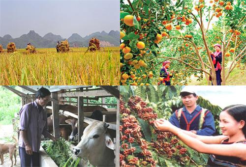 Triển khai Quyết định số 5566/QĐ-BNN-HTQT, ngày 30/12/2016 của Bộ Nông nghiệp và Phát triển nông thôn.