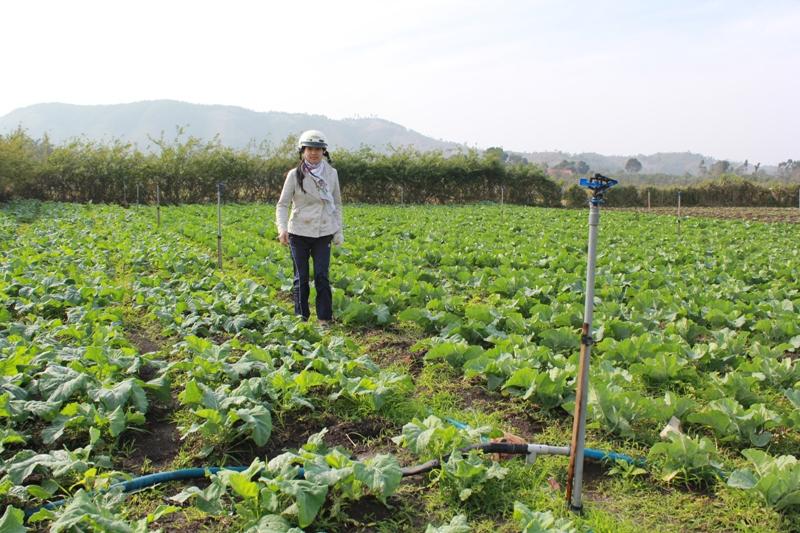 Phê duyệt Kế hoạch sử dụng đất năm 2017 của huyện Cư Kuin.