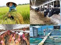 Cơ chế, chính sách hỗ trợ sản xuất vùng bị thiệt hại do thiên tai, dịch bệnh