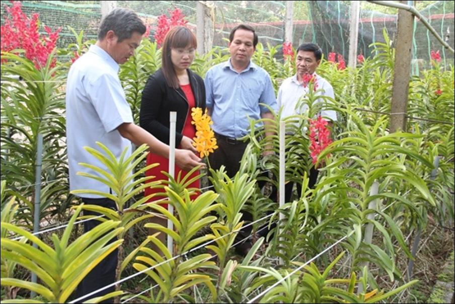 Chủ trương rà soát, điều chỉnh, bổ sung Đề án phát triển nông nghiệp ứng dụng công nghệ cao tỉnh Đắk Lắk đến năm 2020.