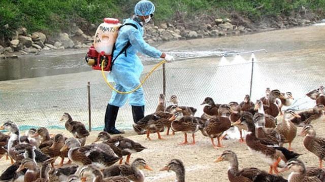 Kế hoạch phòng chống dịch cúm A (H7N9) năm 2017