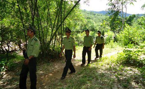 Hướng dẫn một số nội dung thanh toán vốn ngân sách Nhà nước thực hiện Kế hoạch bảo vệ và phát triển rừng
