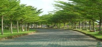 Điều chỉnh dự toán Dịch vụ công ích đô thị trên địa bàn thành phố Buôn Ma Thuột về chăm sóc cây bóng mát đường phố và nơi công cộng