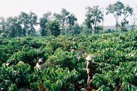 Ban hành quy định giá bồi thường cây trồng, hoa màu gắn liền với đất khi nhà nước thu hồi đất trên địa bàn tỉnh Đắk Lắk.