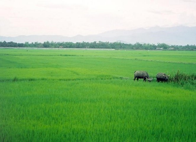 Kinh phí thực hiện chính sách bảo vệ và phát triển đất lúa năm 2016 theo Nghị định số 35/2015/NĐ-CP