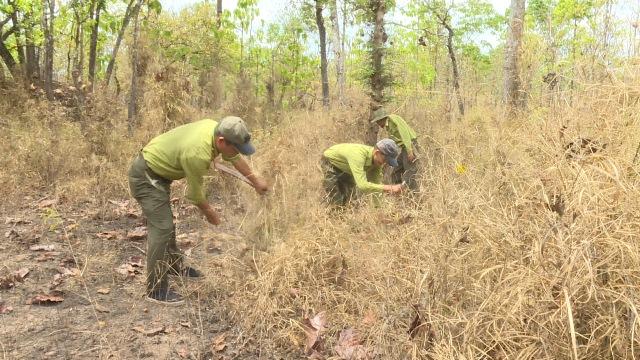 Vườn Quốc gia Yok Đôn tăng cường công tác phòng chống cháy rừng