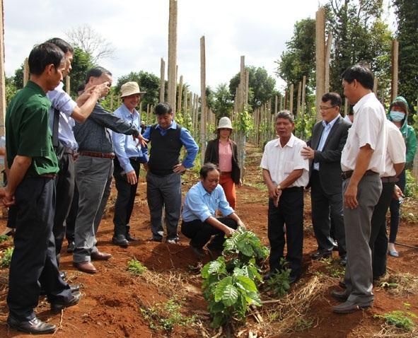 Kỳ vọng từ dự án chuyển đổi nông nghiệp bền vững
