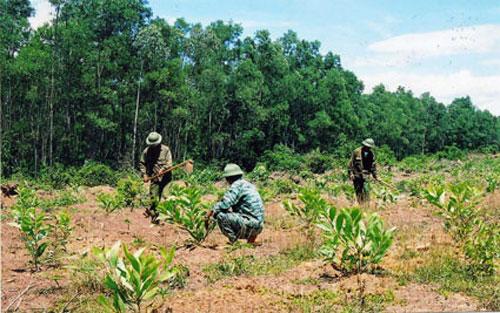 Giao bổ sung kế hoạch trồng rừng thay thế năm 2017.