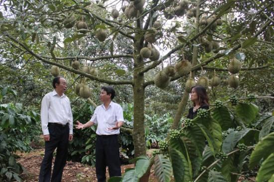 Đề xuất hỗ trợ nghiên cứu các giải pháp phòng trừ sâu, bệnh hại trên cây sầu riêng và một số loại cây ăn quả trên địa bàn tỉnh Đắk Lắk.
