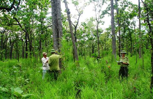 Hỗ trợ Đoàn công tác rà soát, điều chỉnh Quy hoạch bảo vệ, khôi phục và phát triển rừng