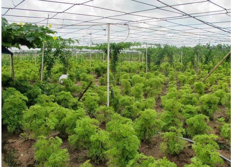 Phê duyệt bổ sung danh mục Nhà máy sơ chế và Trang trại trồng cây dược liệu vào Kế hoạch sử dụng đất năm 2017 của huyện Krông Pắc