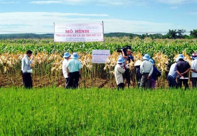 Lập báo cáo kết quả thực hiện và kế hoạch chuyển đổi cơ cấu cây trồng trên đất lúa