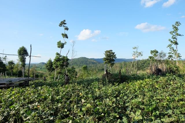 """Phê duyệt báo cáo đánh giá tác động môi trường của Dự án """"Đầu tư trồng rừng, trồng cây ăn quả tại tiểu khu 533, xã Tân Hòa, huyện Buôn Đôn""""."""