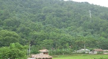 Triển khai Công văn số 4521/BNN-TCLN ngày 01/6/2017 của Bộ Nông nghiệp và Phát triển nông thôn