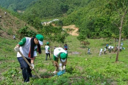 Triển khai Chương trình mục tiêu phát triển Lâm nghiệp bền vững giai đoạn 2016-2020.