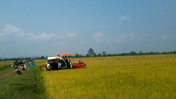 Phê duyệt Đề cương – Dự toán Quy hoạch cánh đồng lớn giai đoạn 2016 – 2025, định hướng đến năm 2030 trên địa bàn tỉnh.