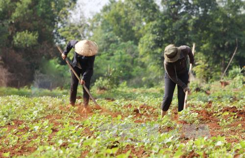 Ban hành định mức bình quân hỗ trợ đất ở, đất sản xuất thực hiện Quyết định số 2085/QĐ-TTg của TTCP trên địa bàn tỉnh.