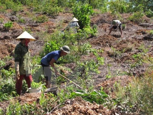 Lập Phương án sử dụng đất tổng thể đối với diện tích các Công ty nông, lâm nghiệp dự kiến bàn giao về địa phương quản lý, sử dụng.