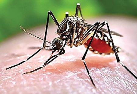 Huyện Cư M'gar – tập trung chủ động phòng chống bệnh sốt xuất huyết trên địa bàn