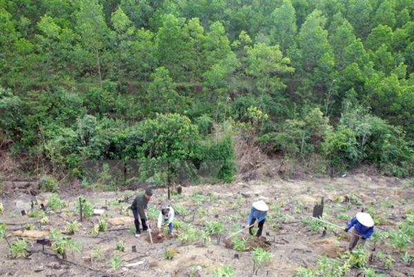 Báo cáo dự án có chuyển đổi mục đích sử dụng rừng.