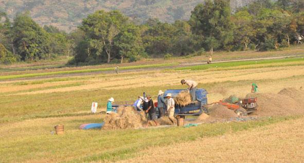 Báo cáo đánh giá thực trạng tổ chức quản lý nông nghiệp và phát triển nông thôn cấp xã trên địa bàn tỉnh Đắk Lắk.