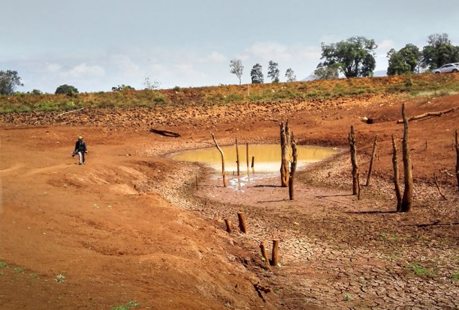 Thẩm định Phương án trồng rừng phòng hộ thay thế diện tích chuyển đổi làm Hồ chứa nước Ea H'leo 1