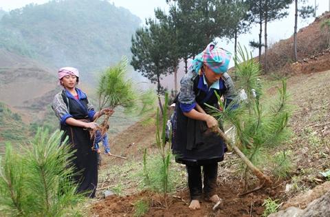 Báo cáo tình hình thực hiện Chương trình mục tiêu phát triển lâm nghiệp bền vững