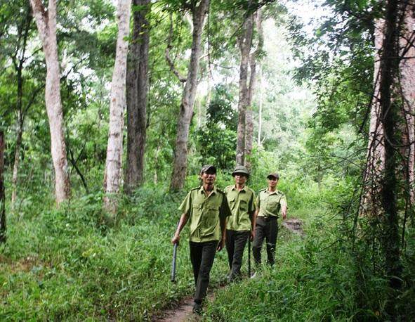 Nâng cao hiệu lực, hiệu quả trong công tác quản lý, bảo vệ tài nguyên rừng tại Đắk Lắk